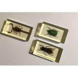 Set 3 insecte încastrate în...